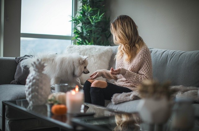 dog in sweater sitting on couch with white dog