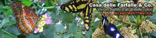 Cervia-la-casa-delle-farfalle