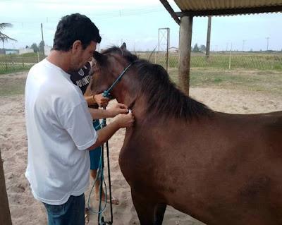 Vigilância em Saúde realiza chipagem de cavalos na Ilha Comprida
