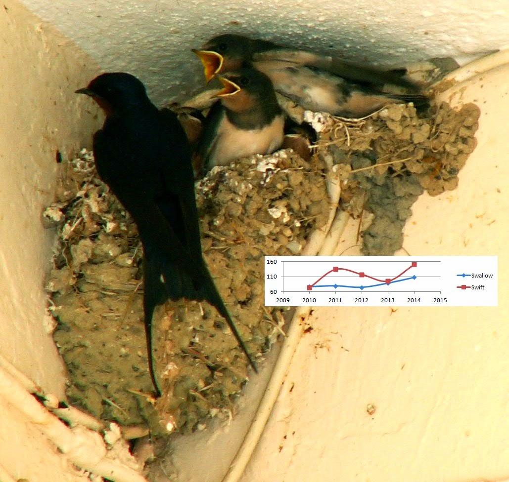 Spring+Bird+Phenology.jpg