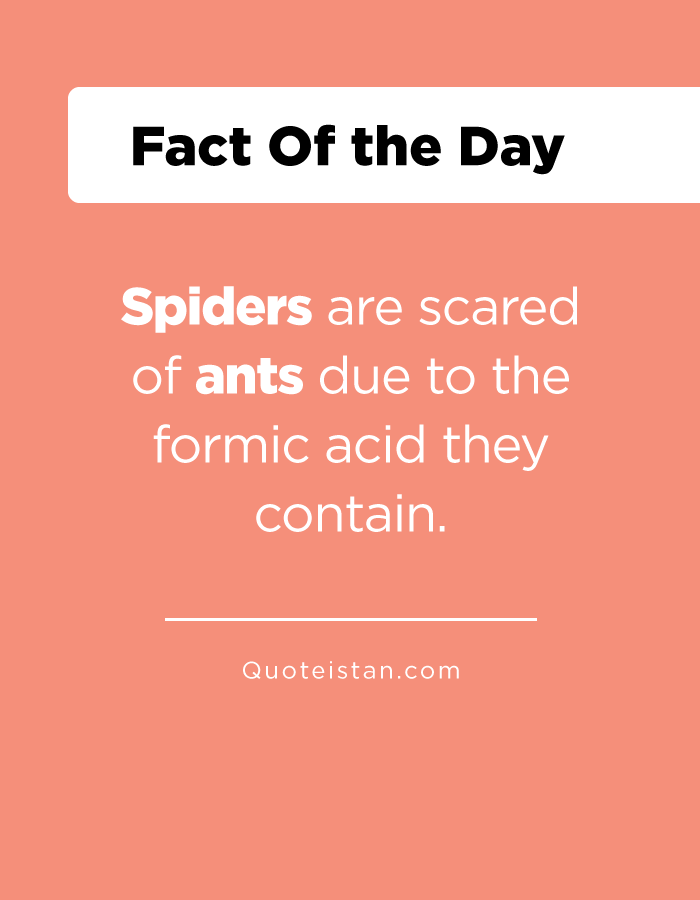 Spiders are scared of ants due to the formic acid they contain.