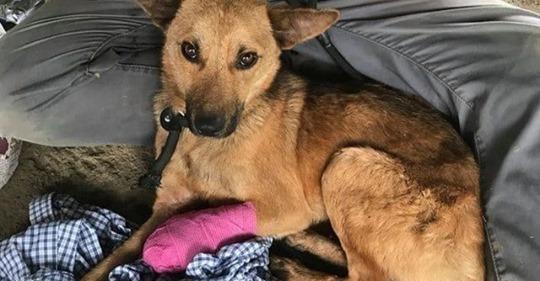 Парень пошел в непроходимые горы, чтобы спасти раненого пса