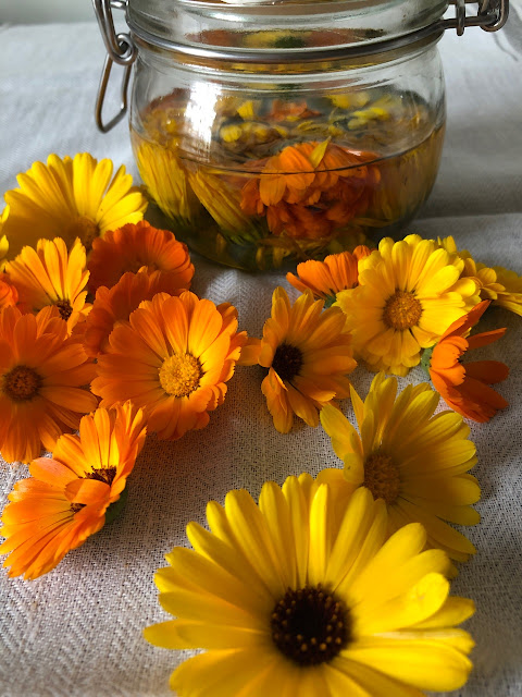 Yellow and gold calendula flowerheads with a jar of calendula oil
