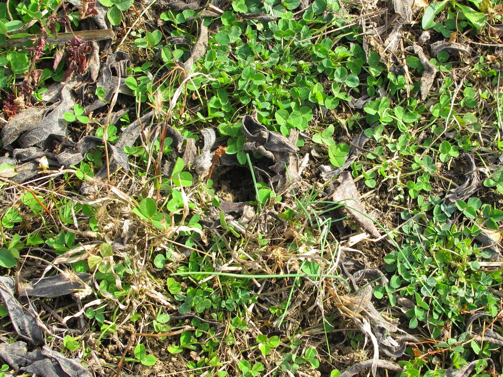 blue jay barrens spider burrow closed for the winter