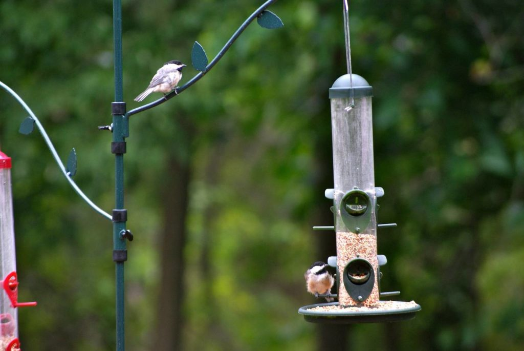 The Best Bird Feeder Poles of 2020: Our Reviews of the Top 5