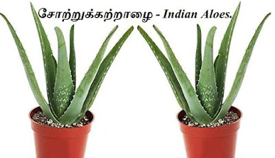 indian aloes 2