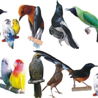 Kisaran Harga Saat Ini Terbaru Obat Gurah Burung Kicau Paling Lengkap