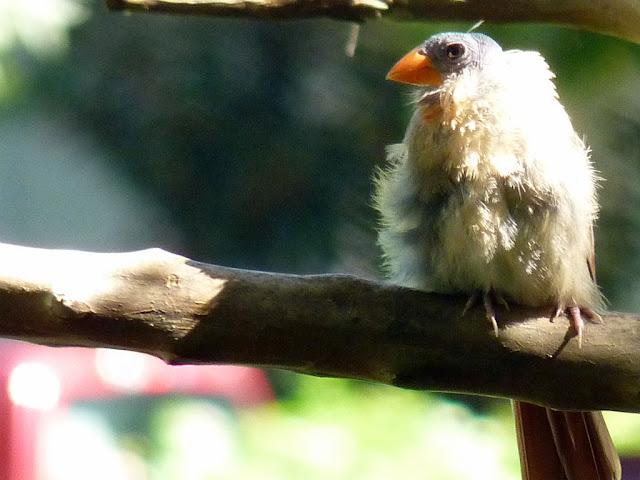 My Toroool Cute Birds Hd Wallpapers
