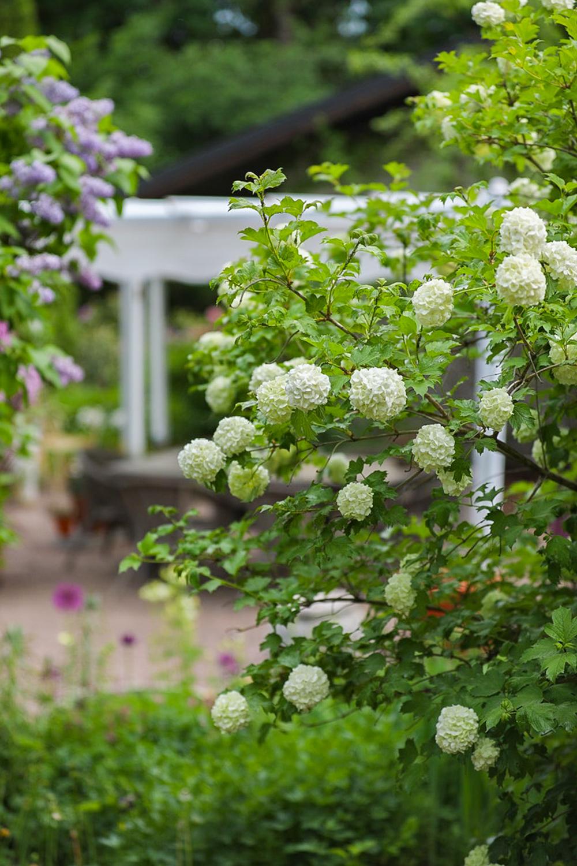 kukkiva-puutarha-100outdoor
