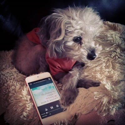 Murchie lays on his sheep-shaped pillow, his paws crossed in front of him. He wears his orange Australia t-shirt. Beside him is a white iPod with The Life-Changing Magic of Tidying Up's cloudy blue cover on its screen.