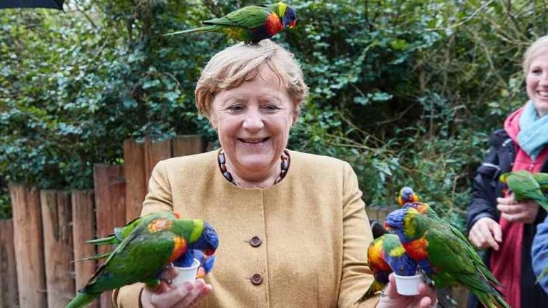 Bird park.. Angela Merkel prepares for retirement with funny pictures As Germany's election campaign heated up, Chancellor Angela Merkel was busy with something else. birds and parrots.