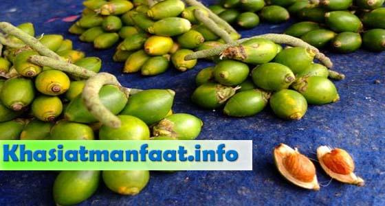 Khasiat dan manfaat buah pinang muda