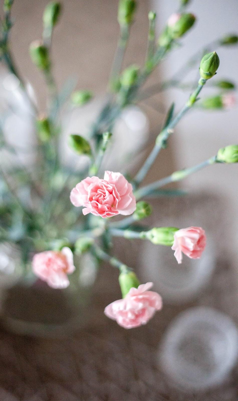 kukkia neilikka