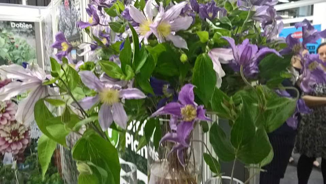 Clematis for cut flowers
