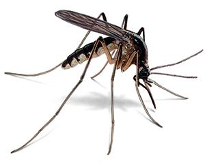 how long do mosquito bites last