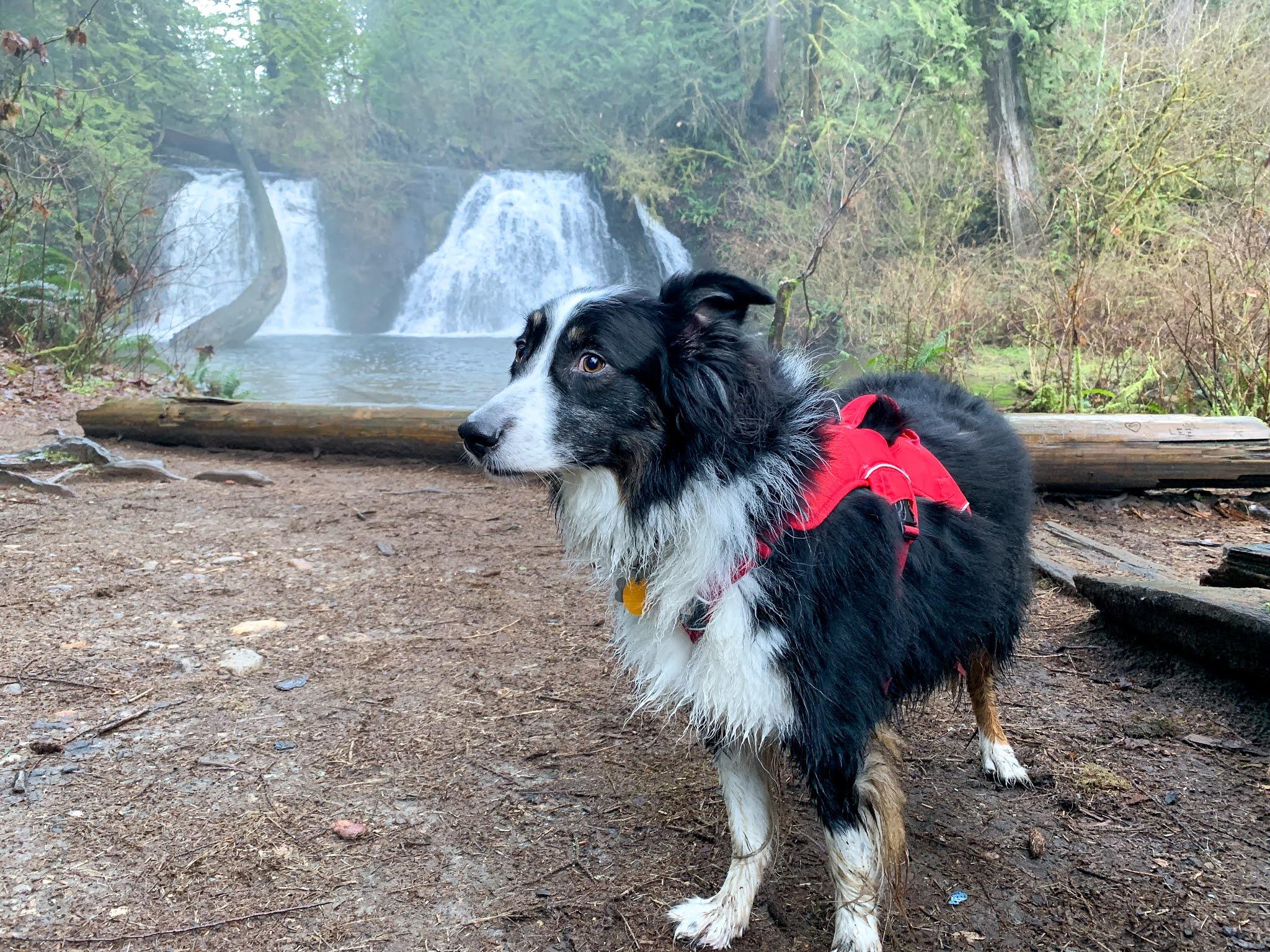 Dog at Cherry Creek Falls