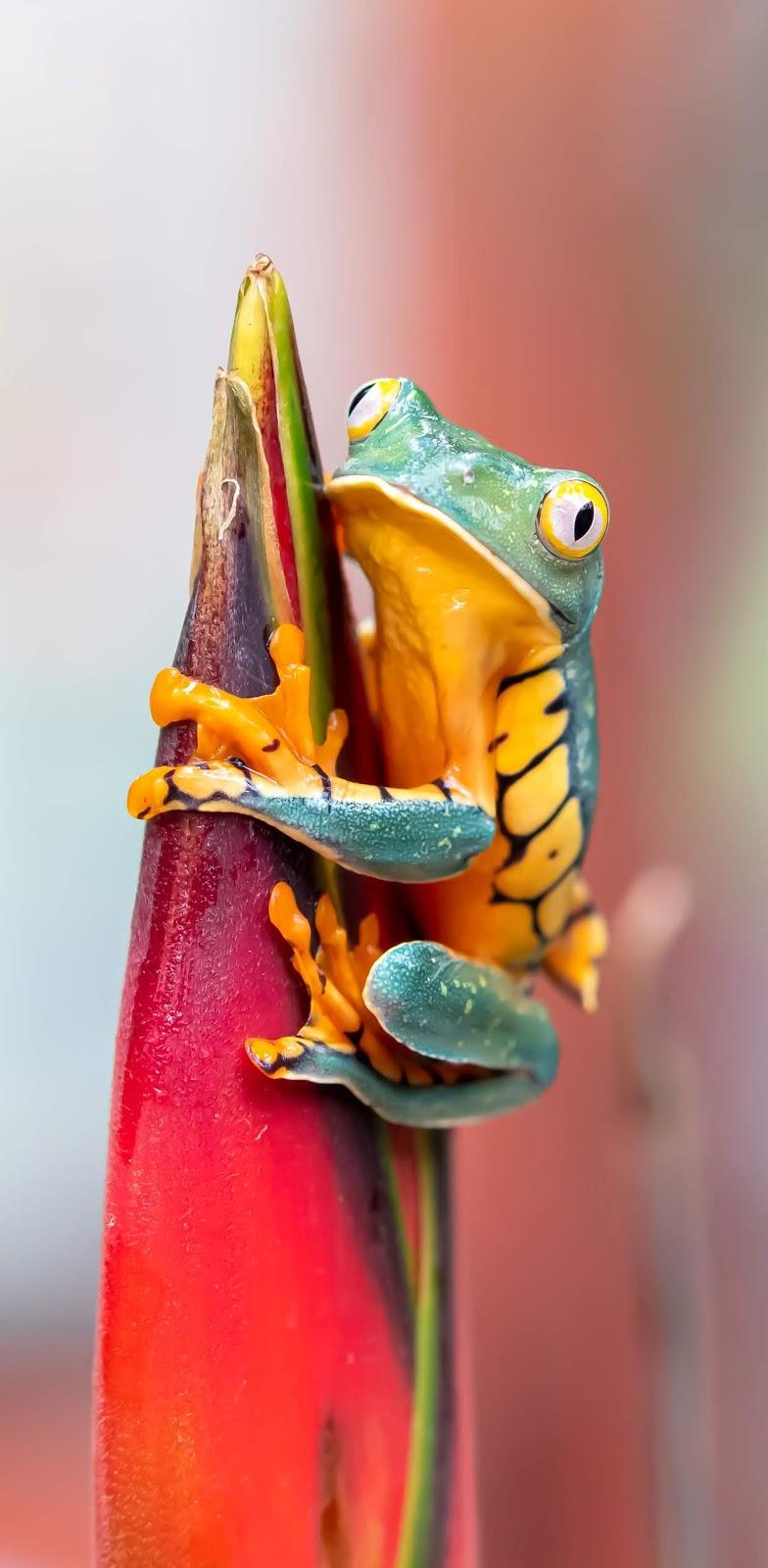 Cute frog.