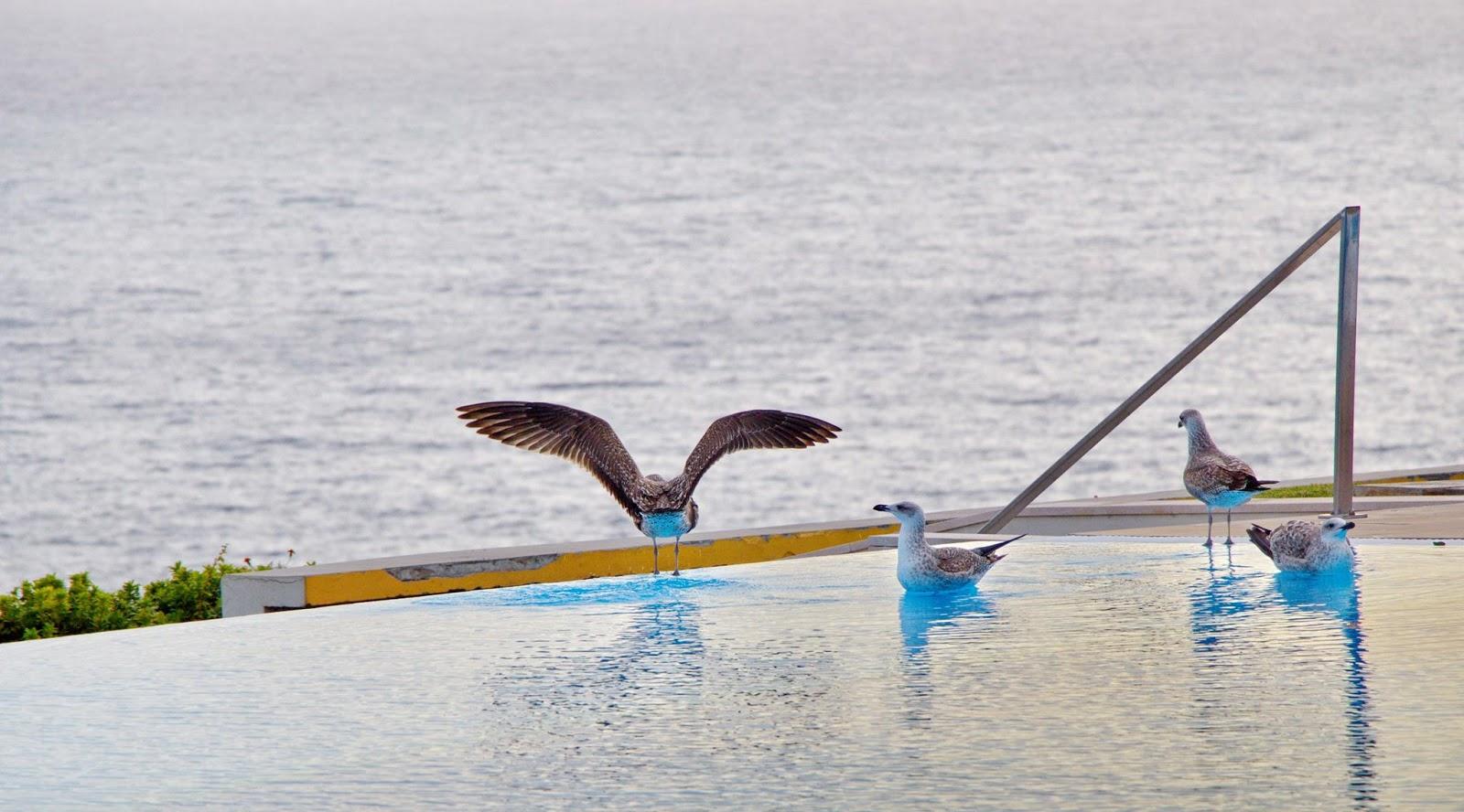 gaivotas na piscina