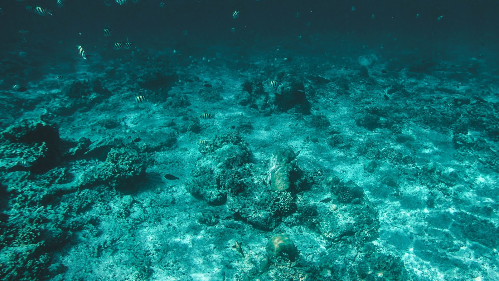GoPro Snorkeling Photos