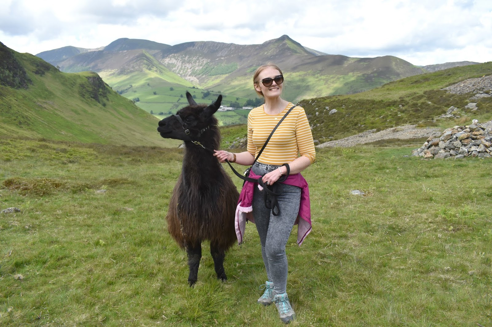 Once Upon a Llama - Llama Trekking Lake District