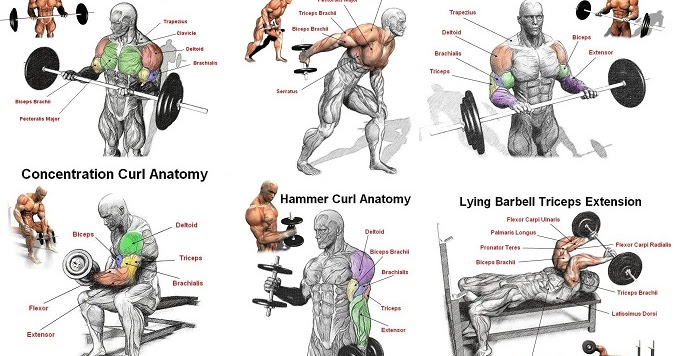 The Best Arm Workout For Mass And Strength - all ...