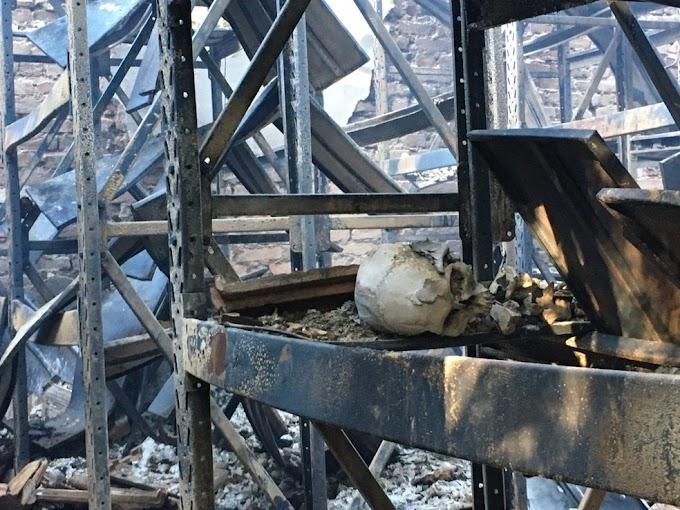UFMG planeja comissão para estudar prejuízos com incêndio no Museu de História Natural