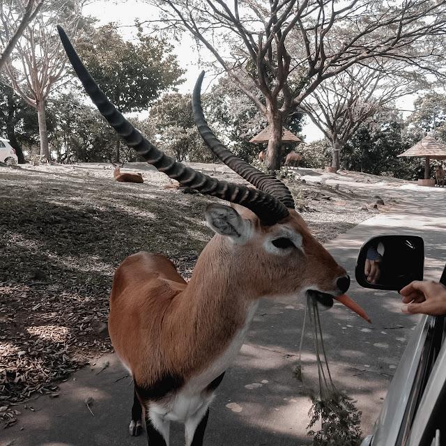 Promo Tiket Masuk ke Taman Safari prigen
