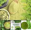How to treat upto 22 chronic diseases with moringa