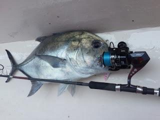 Ikan GT atau Kuwe Gerong