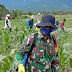 Serda Tutus Gunawan Bantu Petani Rawat Tanaman Jagung