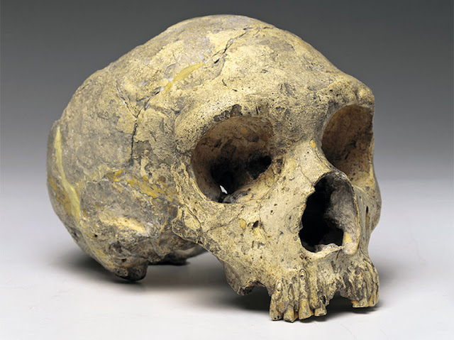 A new look at the Gibraltar Neanderthals