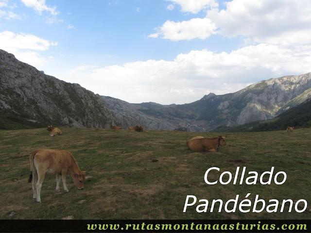 Ruta Caín Terenosa: Collado Pandébano