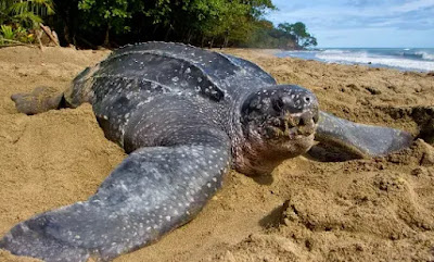 Look 10 Animals That Will Go Extinct in Your Lifetime