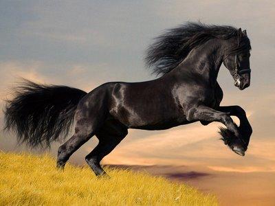 Nomes originais para cavalos