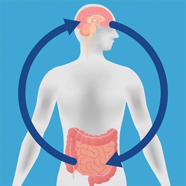 Lo studio trova la chiave per la longevità - ed è nell'intestino