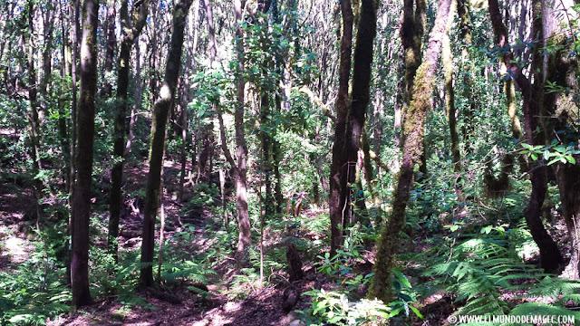 Bosque de Los Cedros - Garajonay