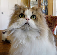photo of Roger the cat
