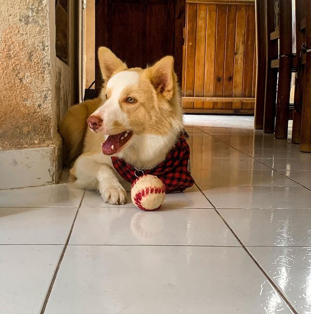 Dog on tiled floor: Photo by valentina on Unsplash