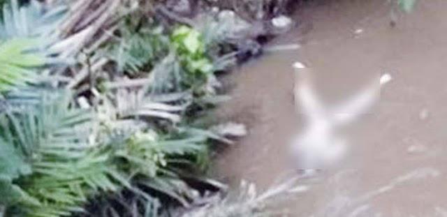 Mayat Tanpa Identitas Di Temukan Warga Nelayan Di Pesisir Pantai Utara Tangerang