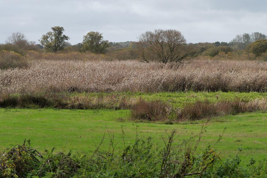 Le marais de Gannedel en automne