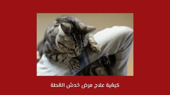 كيفية علاج مرض خدش القطة