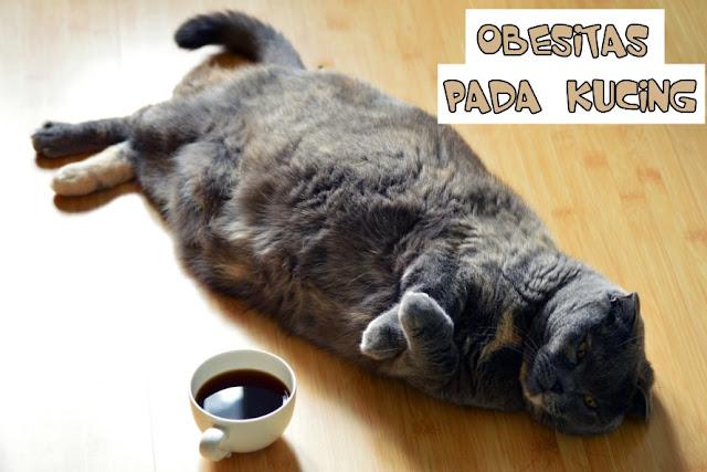Kucing yang Terlalu Gemuk