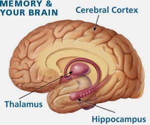 Brain Memory Loss | Evaigeren