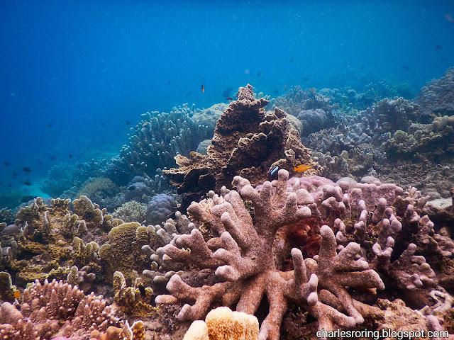 underwater photo of marine life in Raja Ampat islands of West Papua