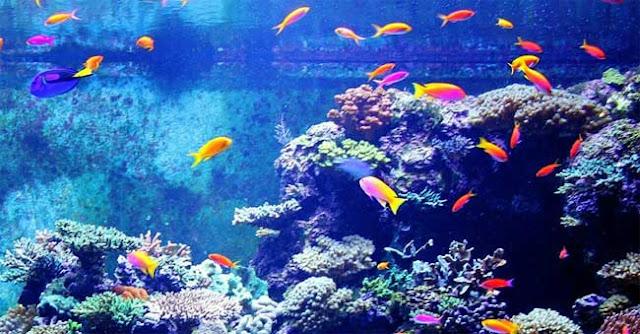 5 signes que votre aquarium est surchargé