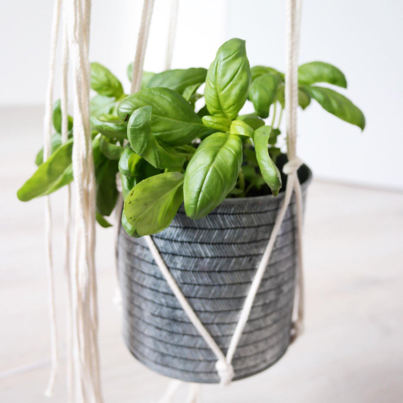 diy-plant-hanger-plante-suspension