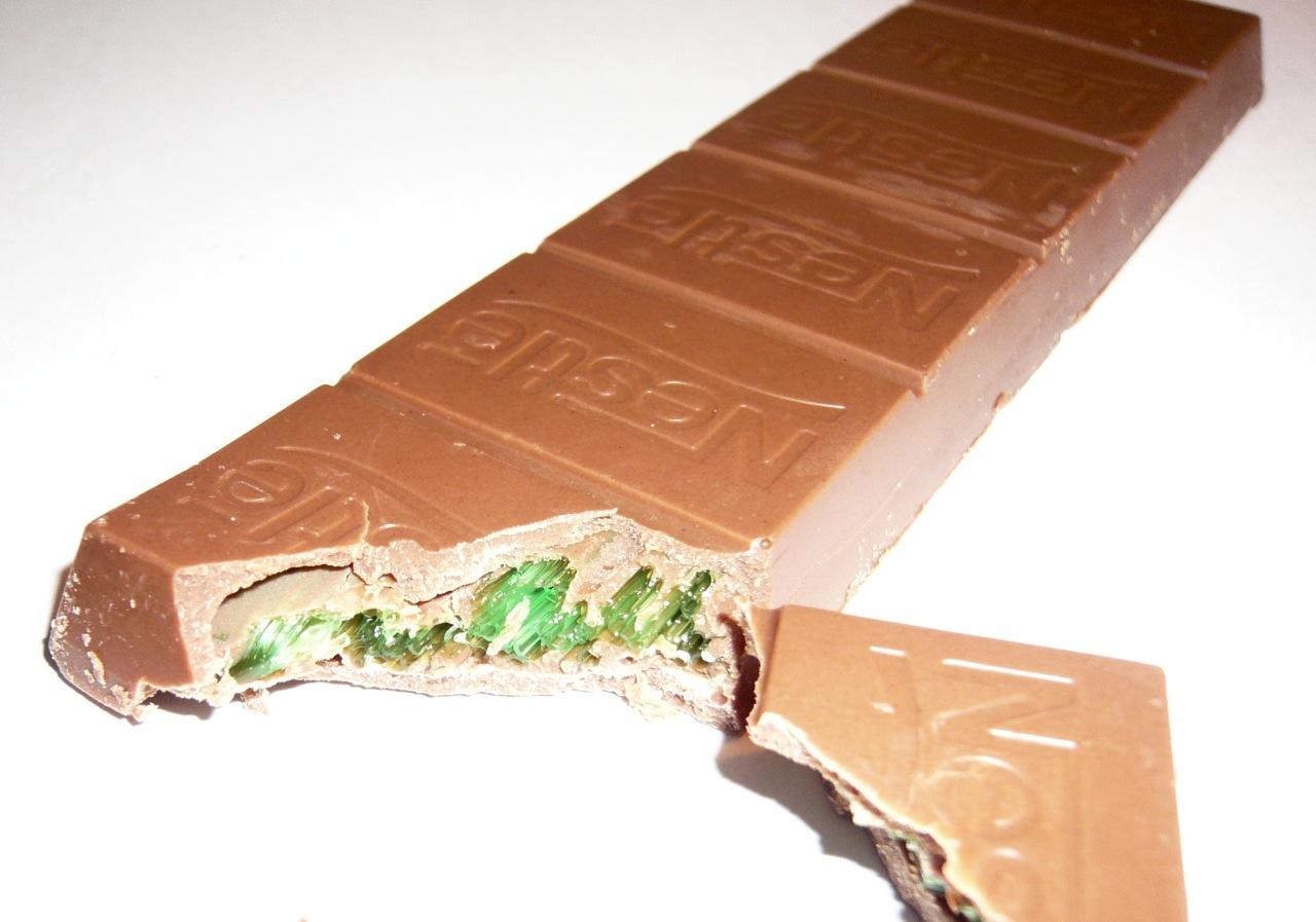 Yorkie Ate Chocolate Cake