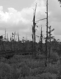haunted swamp 1
