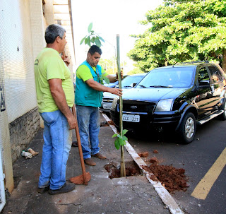 Prefeitura em parceria com a CPFL plantará mais de 2 mil árvores em Ourinhos