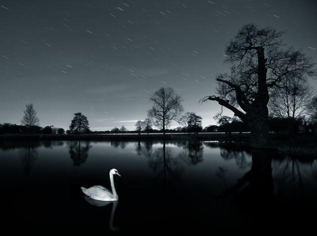 Alex Saberi online Portfolio - Swan